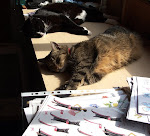 Our two cats..Billy and Chloe..I got them when I lived on my own..sadly they both died in 2011.