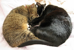 Billy and Chloe, who sadly died 4 months apart in 2011 aged 18 years