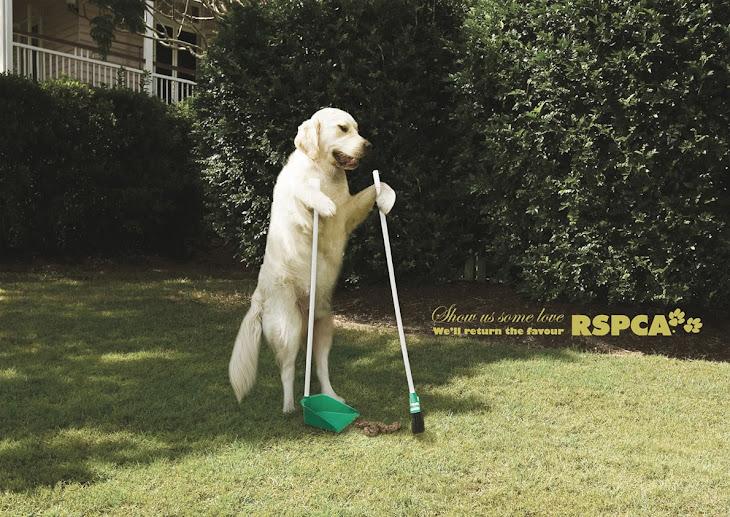 RSPCA | All Social Ads