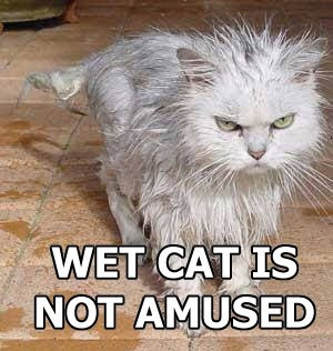 Mad Wet Cat Picture