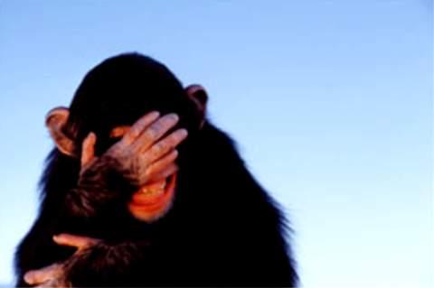 صوره بيتكلـــــم بها لسانك,,متجدد - صفحة 3 Embarrassed+monkey