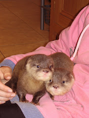 The cubs aged 7 weeks