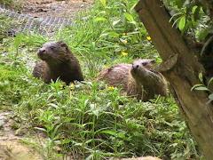 Smaller cub (left) and Carmen