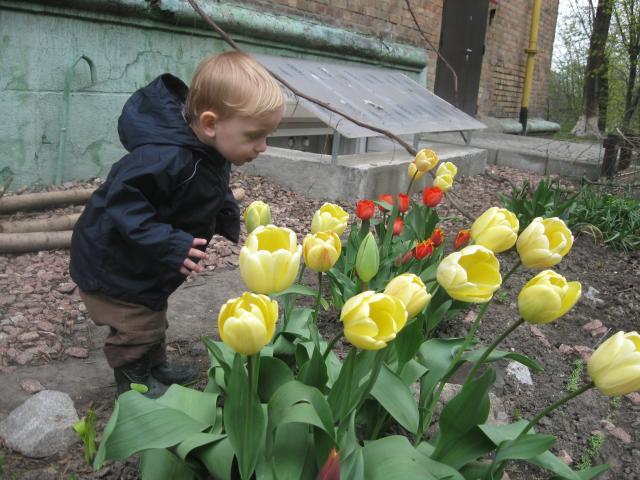 """Фотоконкурс """"Лучшее фото тюльпанов - 2010"""""""