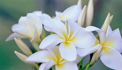 tranquillità, purezza, calma, Dio