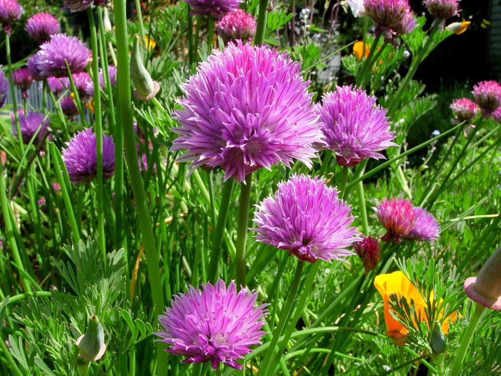 zelenilo proljeće pozadina za desktop za download klikni na sliku