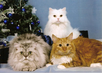 download Božićne slike mačke
