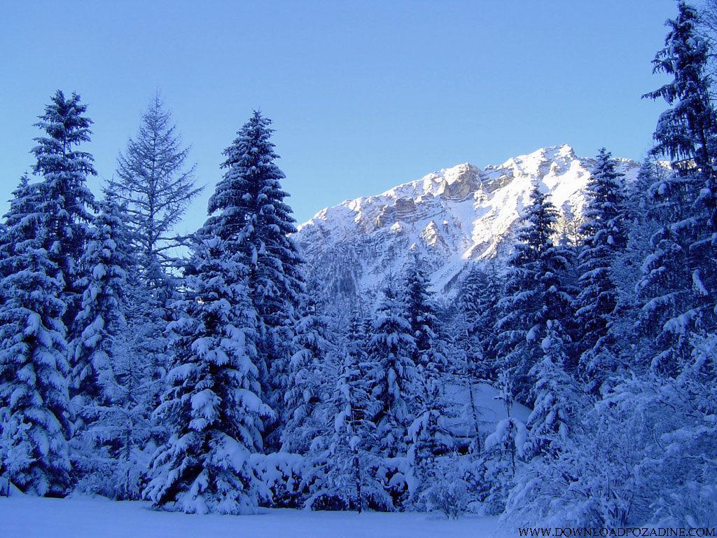 http://1.bp.blogspot.com/_pNylTS_iD1Q/TOktlh2L56I/AAAAAAAAFiQ/OmGAsni9Puc/s1600/priroda-pozadine-za-desktop-0021-zima-snijeg-borovi.jpg