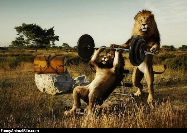 http://1.bp.blogspot.com/_pOJsE4mihRI/TK5mcVLfeyI/AAAAAAAAAlI/3SE6qVSHa4o/s1600/Lions_Working_Out.jpg