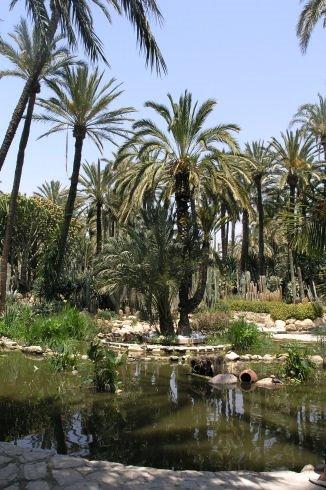 Gaj palmowy w Elche