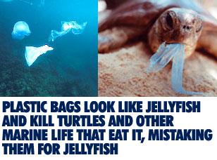 saving marine life essay