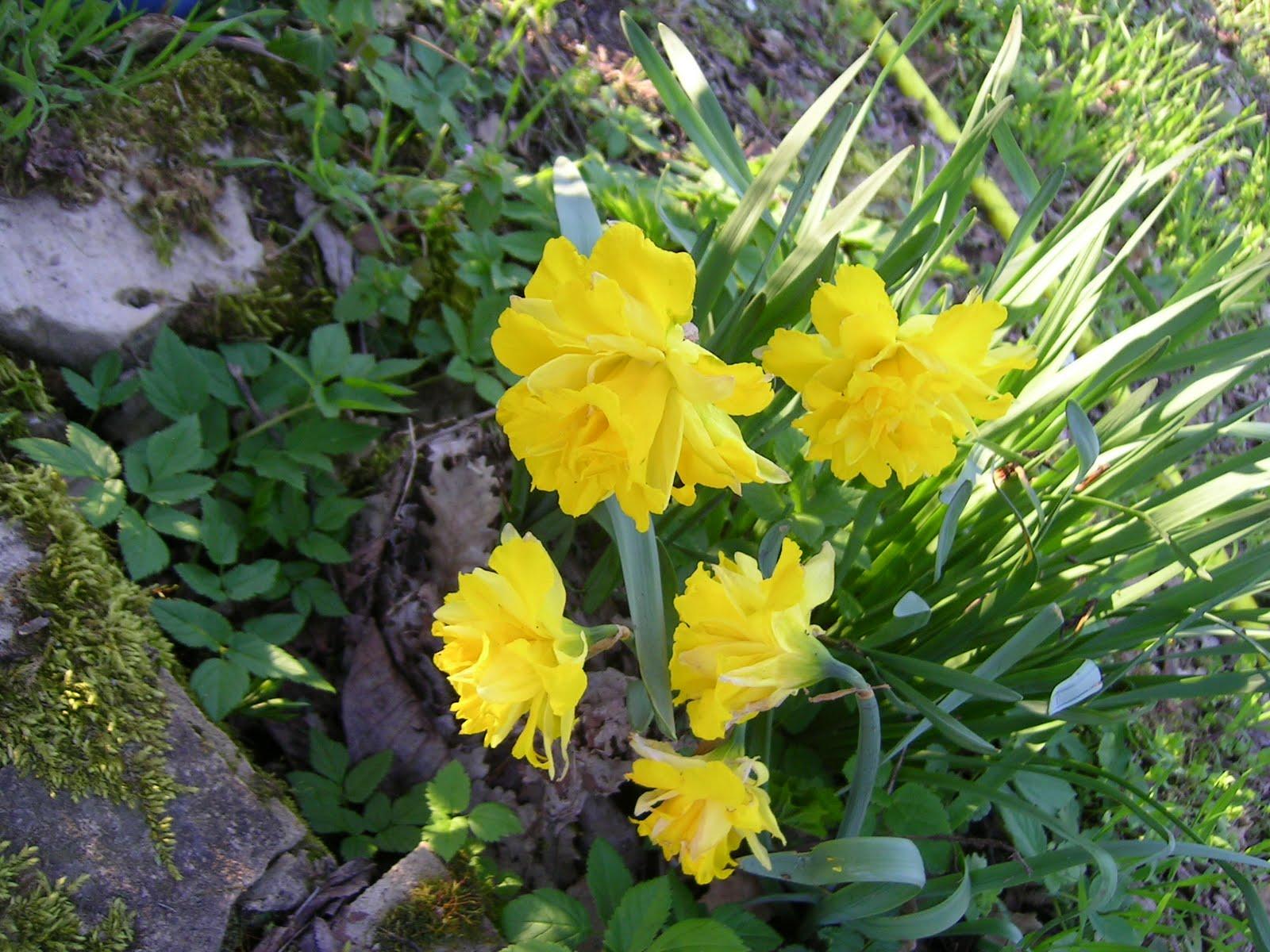 Pz c fiori di primavera for Fiori di primavera
