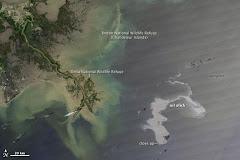 Mancha de Petroleo en el Golfo de México