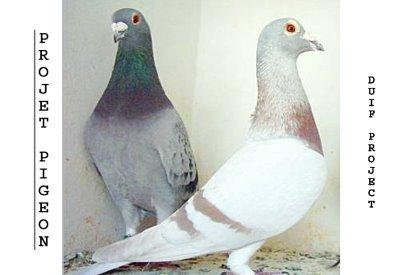 Projet Pigeon