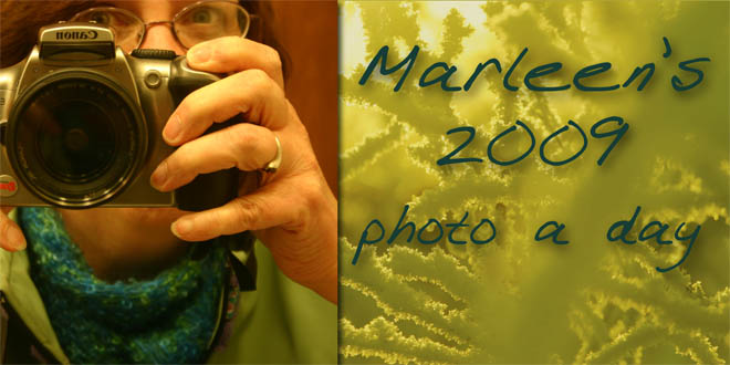 Marleen's 2009 photo a day blog