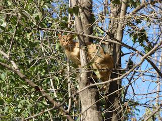gato árbol parque grande Zaragoza