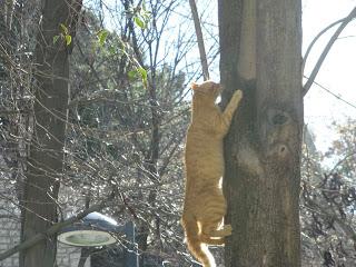 gato escalando árbol subiendo árbol
