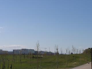 Árboles Parque de Plaza