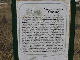 oveja churra tensina Parque de la balsa Torrecilla de Valmadrid