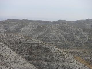estepas y montes de Zaragoza
