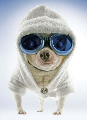 Cute chihuahua clothes on pinterest chihuahua clothes - Dog clothes for chihuahuas ...