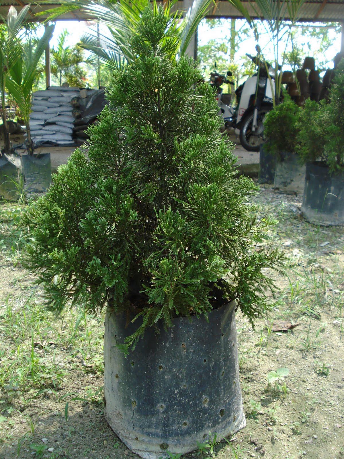 Pokok Hiasan Laman