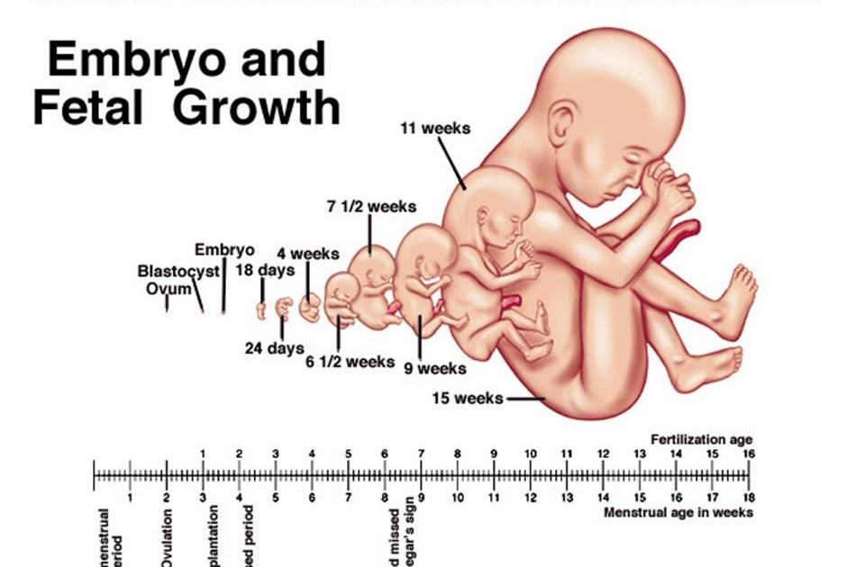 Islam Analyzed  Three Stages Of The Baby In The Womb