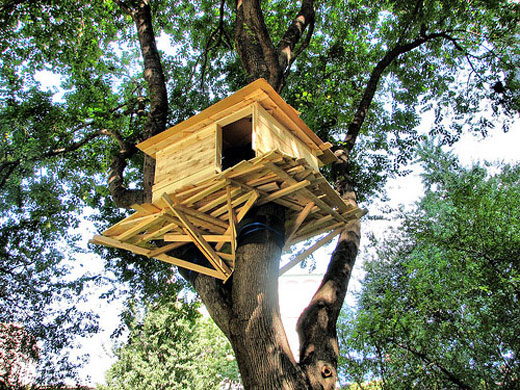 How to build a treehouse on a budget