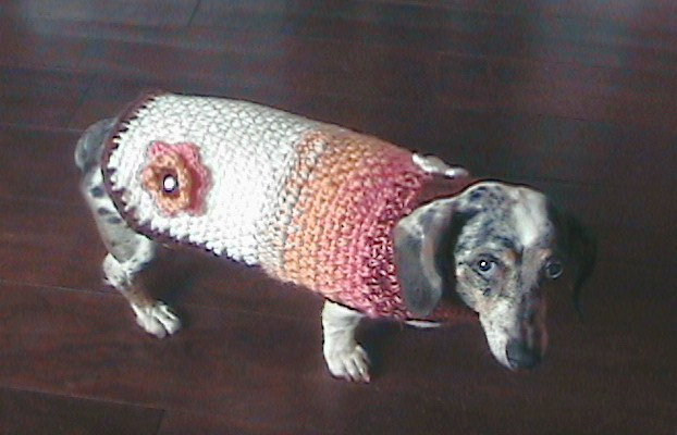 The Hook Hound September 40 New Crochet Dog Sweater Pattern Easy