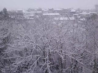 写真: 6日目の朝に撮影した窓の外の景色。昨夜からの雪で、木々や家の屋根、道路などに白い雪が積もっている。
