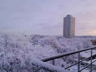 写真: 7日目朝の雪景色 その1