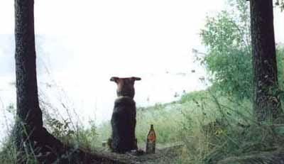 Собачья поэзия Хозяин и собака на рыбалке