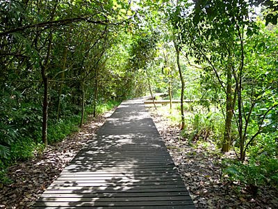 Mangrove Boardwalk at Sungei Buloh