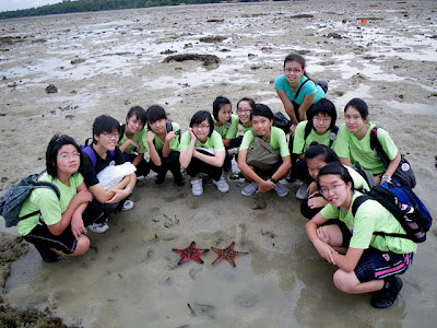Group Photo with Knobbly Sea Stars (Protoreaster nodosus)