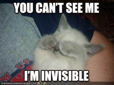 funny-pictures-kitten-thinks-he-is-invis