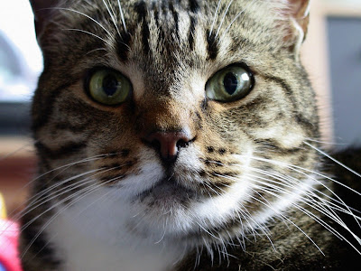 """I gatti """"parlano""""…anche in dialetto! [ricerca] – Petpassion.tv"""