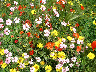 Un fiore per ogni occasione for I fiori della balsamina