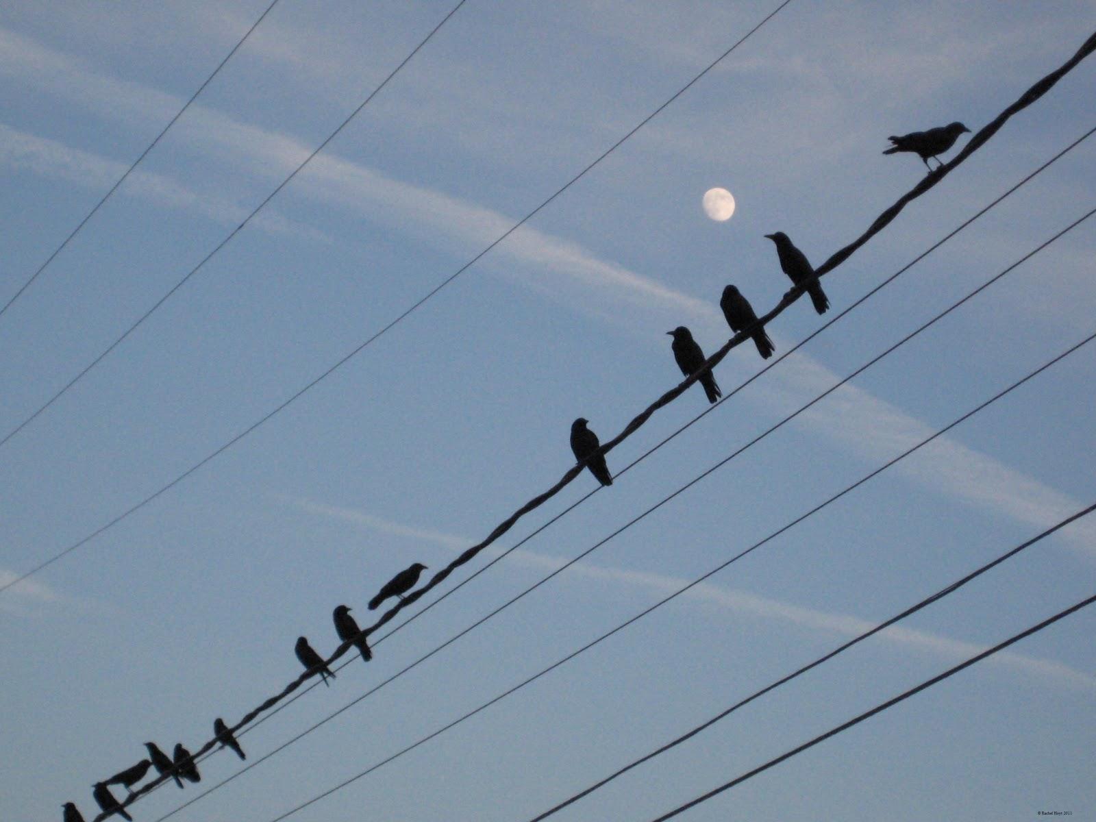 http://1.bp.blogspot.com/_pdo3-widU-s/TS0dWbPwxwI/AAAAAAAAA5E/c15U4NNrarc/s1600/crows.jpg
