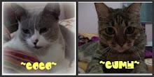 ~Meow-meowku~