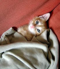 Apu, el gato de Ona
