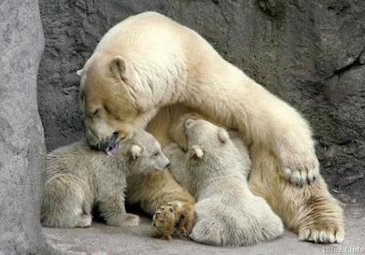 фото, фотография, животные, братья наши меньшие, забавные фото животных, нежность, любовь, звери, отношения, фотоприколы