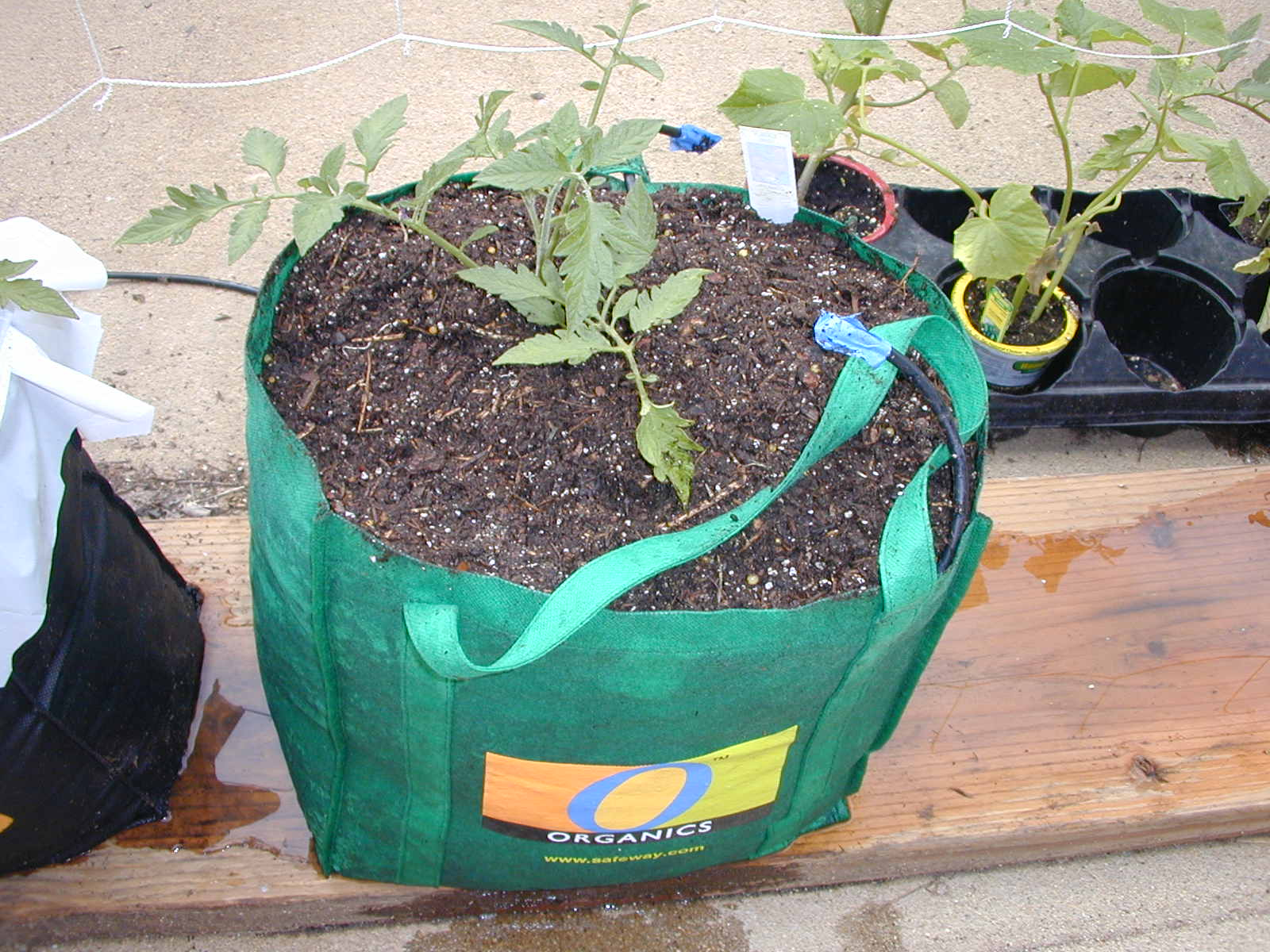 Global Buckets Grow Bags