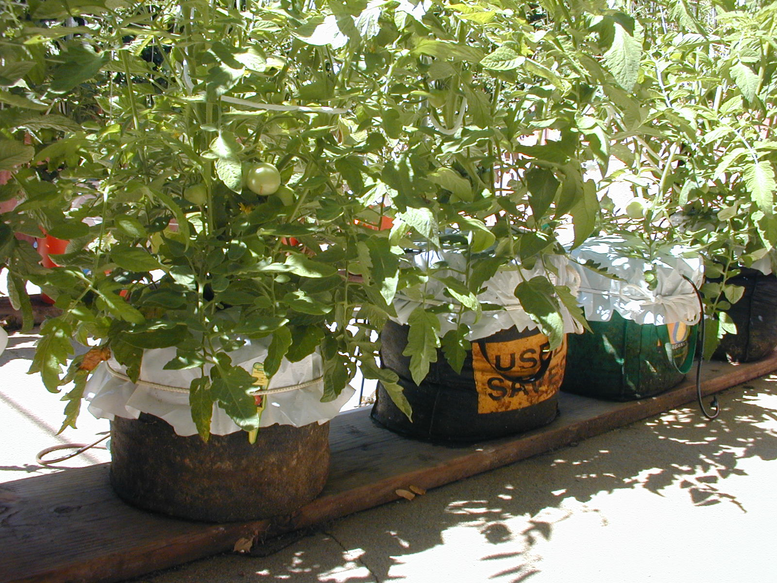 """It's late summer and the Grow Bag experiment has been great. In fact, next summer we'll only use Grow Bags, completely eliminating the """"expensive"""" plastic ..."""