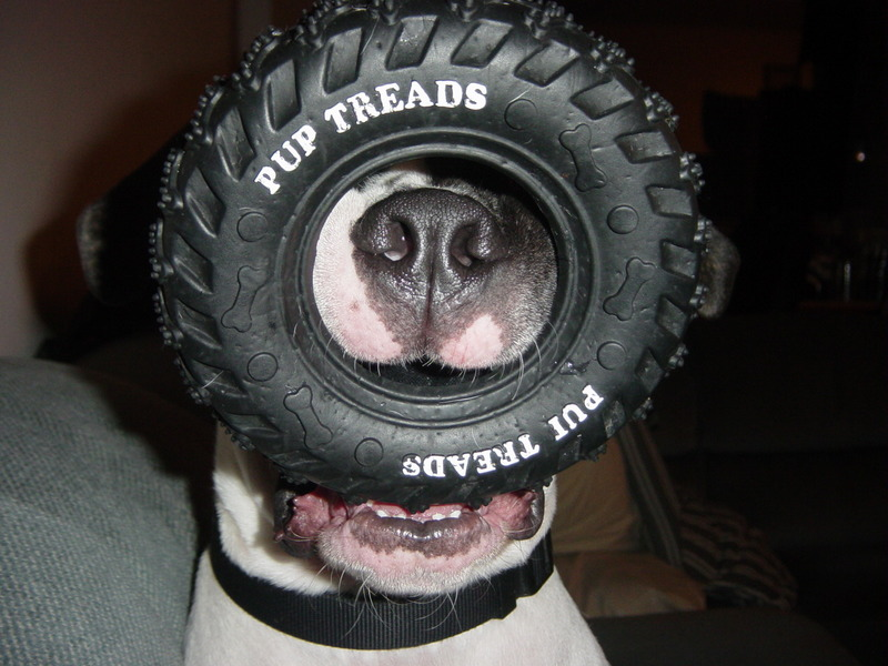 [tire+dog]