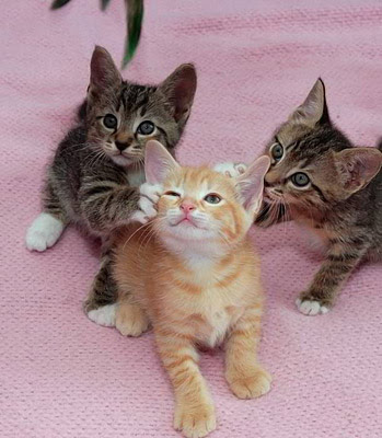 cute and funny cat