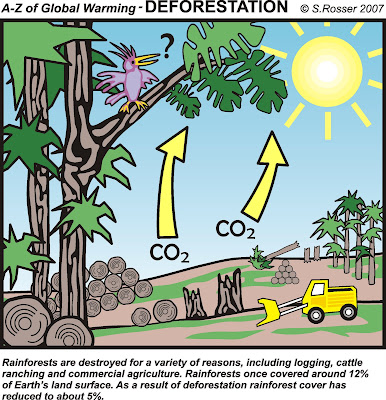 deforestation causes climate change essay Causes according to the united nations framework convention on climate change (unfccc) secretariat, the overwhelming direct cause of deforestation is agriculture.