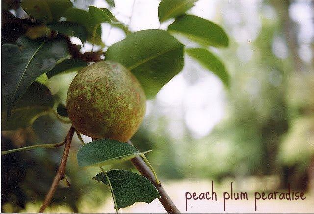 peach plum pearadise