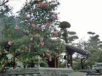 入口にあるピンク色の椿