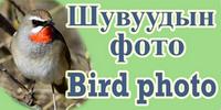 Шувуудын фото зургийн уралдаан  -  Bird photo contest