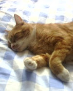 Last picture of our loving cat Rosso, unfortunately he may live for two years. We still miss you...